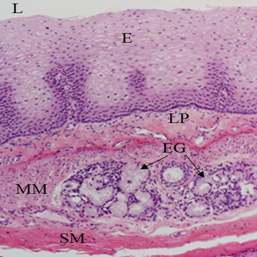VMS Histology Atlas